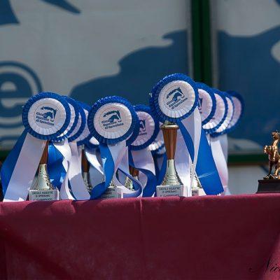 Le coppe per la premiazione